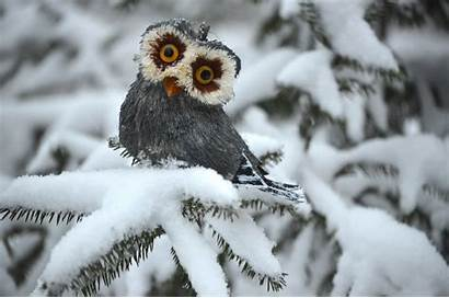Snow Animals Funny Owl Pines Pc Wallpapers