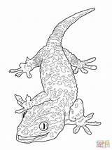 Coloring Gecko Pages Lizard Tokay Bearded Dragon Drawing Basilisk Monitor Printable Flying Aboriginal Line Getdrawings Crested Drawings Print Baby Designlooter sketch template