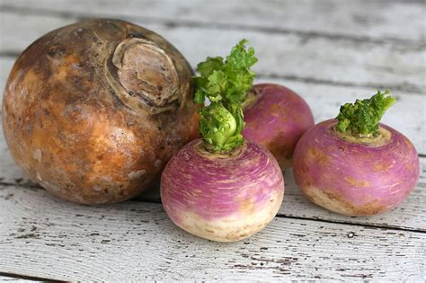 rutabaga vs turnip what s the difference between a turnip and a rutabaga