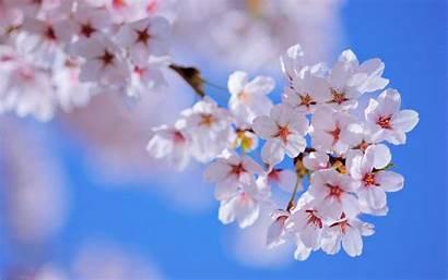 Flowers Spring Backgrounds Pixelstalk