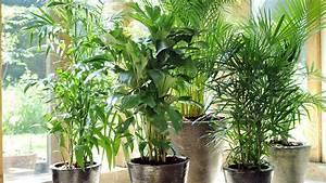 Le Palmier Lu Plante Dintrieur De Juillet