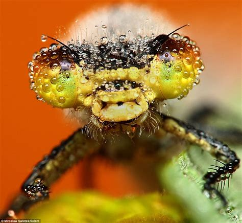 The Stunning Pictures Of Sleeping Insects Covered In Early