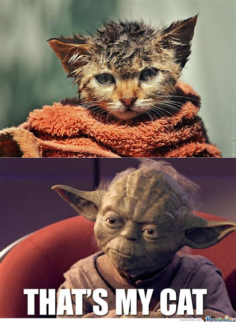 New Cat Memes - yoda s new cat by chillinjohnson meme center