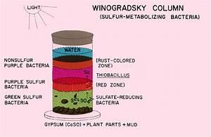 Winogradsky Column Diagram