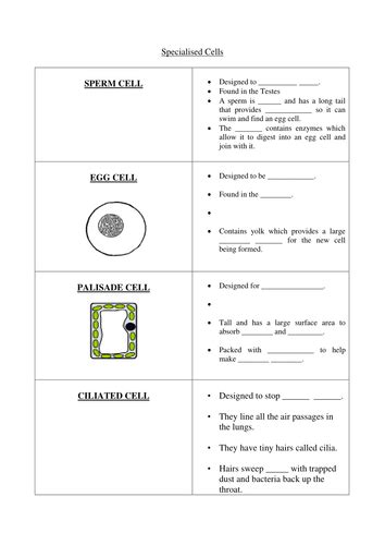 specialised cells worksheet by lundi teaching resources