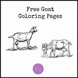 Goat Coloring Something2offer sketch template