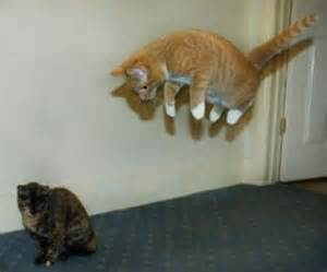 cat finder como fazer seu gato flutuar kabuls
