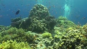 Greatest Underwater Views of Red Sea!
