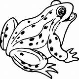 Frog Coloring Pages Realistic Outline Drawing Tree Coqui Frogs Printable Cartoon Clipartmag Sheets Sheet Animals Getdrawings Paintingvalley sketch template