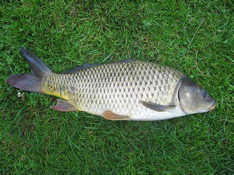 les poissons societe de peche de letang de vendlincourt