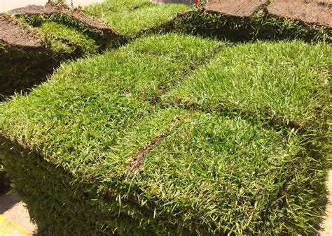 Planting Grass For A Mid-summer Lawn Makeover