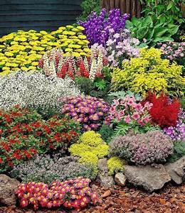 Online Pflanzen Kaufen : gro er staudengarten 14 pflanzen g nstig online kaufen mein sch ner garten shop garten ~ Watch28wear.com Haus und Dekorationen