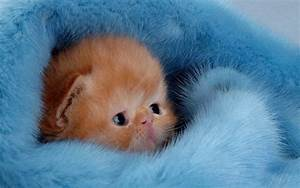 33 Cute Kitten Pics - InspirationSeek.com