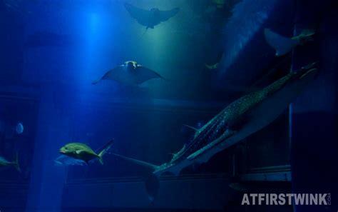a tour inside osaka aquarium kaiyukan part 2
