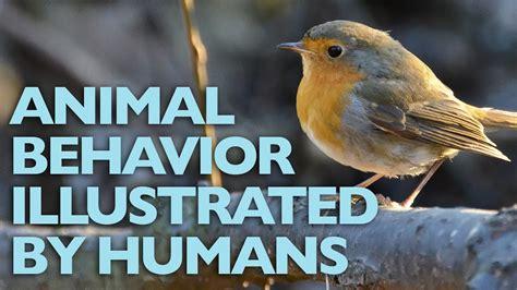 The European Robin Animal Behavior Illustrated By Humans