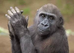 Gorilla GIFs - Find & Share on GIPHY
