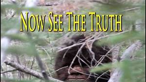 Tv Show Films Bigfoot  Extraordinary Sasquatch Video