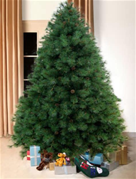 scottish fir green christmas tree ft tall artificial