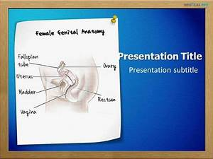 Female Genital Anatomy Powerpoint Template
