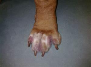 Voedselallergie bij hond
