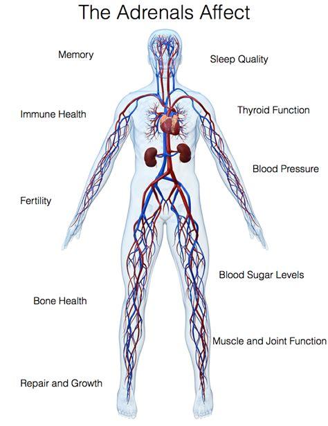 adrenal health texas regional health