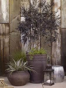 Miniteich Pflanzen Set : 120 besten garten bilder auf pinterest g rtnern garten terrasse und teiche ~ Buech-reservation.com Haus und Dekorationen