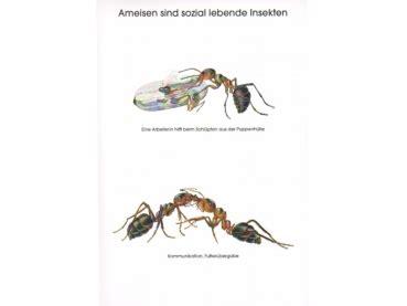 was sind ameisen antstore ameisenshop ameisen kaufen poster ameisen sind sozial lebende insekten