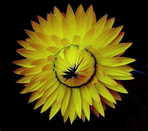 mellow yellow siege social mellow yellow photograph by stephen chard
