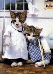 doctor cat 1000 images about cats in costumes on kitty
