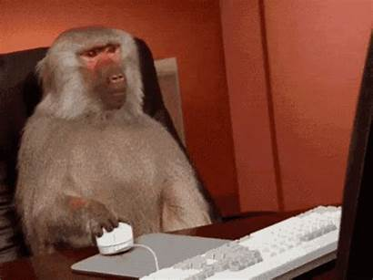 Monkey Using Taxes Being His