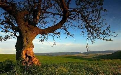 Summer Nature Desktop Wallpapers Backgrounds Background Tree