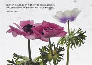 Atemübung Zur Beruhigung : beruhigung foto bild blumen karten anemone bilder auf fotocommunity ~ A.2002-acura-tl-radio.info Haus und Dekorationen