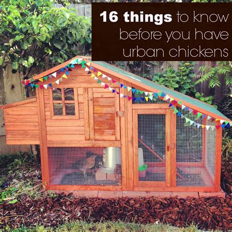 16 Things To Know Before You Have Urban Chickens Life