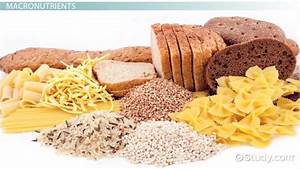 What Are Nutrients? - Definition & Examples - Video ...