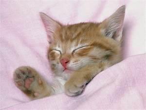Sleeping cat wallpaper cute on pc - beautiful desktop ...