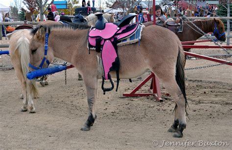 pony mule pink mules saddles saddle fall fun