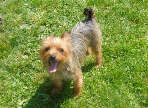 Karpet Max Ruse ibiza chien 224 adopter dans la r 233 gion haute