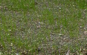 Semer Gazon Periode : travaux du jardin en septembre jardinage s ~ Melissatoandfro.com Idées de Décoration
