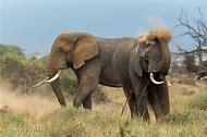 Kenya Wildlife Animals