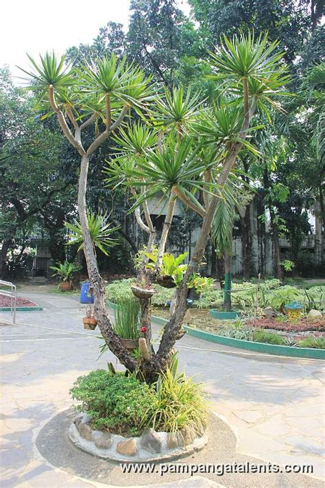 Garden Chinese chinese garden manila
