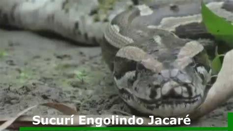 baixar de videos de cobras e crocodilo