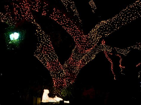 san antonio zoo lights 2016 amanda l