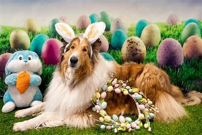 Easter Dog Happy Animal Shetland Sheepdog Dogs