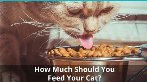 feed  cat  cat feeding guide