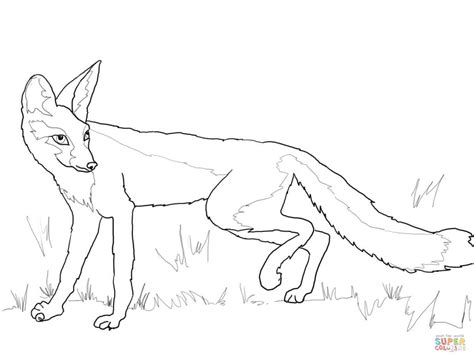Kit Fox Coloring Page Free Printable Coloring Pages
