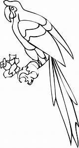 Coloring Parrot Printable Realistic Colouring Animal Sheets Bird Word Clipart Dental Bestcoloringpagesforkids Getcolorings Popular Stuff sketch template