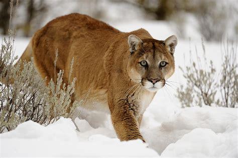 North American Mammals Photograph By Don Johnston