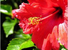 Lotus flower wikipedia free encyclopedia wallpaperscraft filered flower openjpg wikipedia mightylinksfo