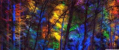 Forest Colorful Wallpapers 3440 4k 1440 Ultra