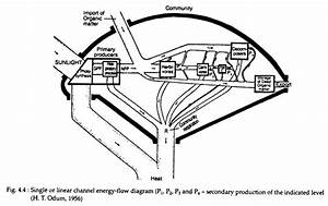 Top 3 Models Of Energy Flow In A Community